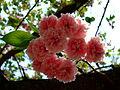 Flower-center135347.jpg