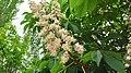 Flower25448.jpg
