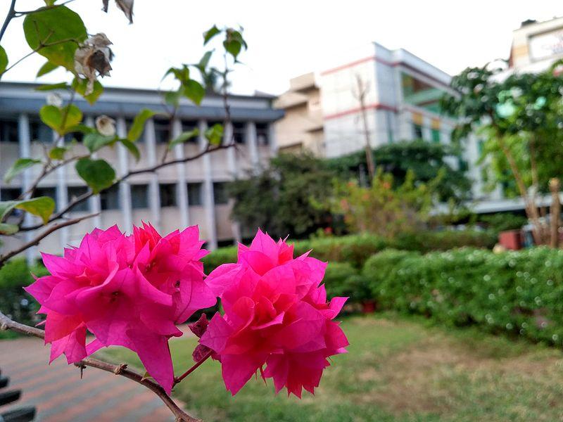 File:Flower 124.jpg