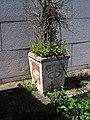 Flowerpot (38975056025).jpg