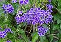 Flowers - Enoshima, Japan - DSC07834.jpg