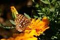 Flutterby (208500016).jpg