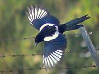 Flying (5405942436).jpg