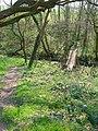 Footbridge near Six Acre Wood - geograph.org.uk - 383694.jpg