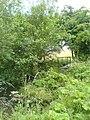 Footbridge near Speakman House - geograph.org.uk - 485941.jpg