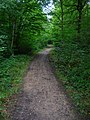 Footpath, Blean Woods Nature Reserve - geograph.org.uk - 534470.jpg
