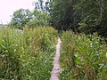 Footpath near River Allen, New Town - geograph.org.uk - 466088.jpg