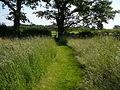 Footpath north east of Plumley - geograph.org.uk - 1634681.jpg
