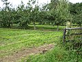 Footpath through cider orchard - geograph.org.uk - 930719.jpg