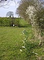 Footpath towards Highfield Farm - geograph.org.uk - 983529.jpg
