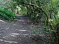 Footpath towards Wordesley, West Midlands - geograph.org.uk - 980917.jpg