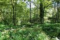 Forêt domaniale de Meudon @ Meudon (28248271901).jpg