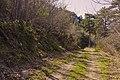Forêt domaniale des Avant-Monts 03.jpg