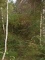 ForestFlotten.JPG