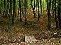Forest on a hill and a stream - Лес на горке и кладка через ручей - panoramio.jpg