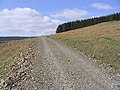 Forestry Road - geograph.org.uk - 392545.jpg