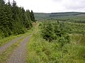Forestry road at Archer Cleugh, Kielder. - geograph.org.uk - 501686.jpg