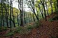 Foster Wood, Colden Clough - geograph.org.uk - 275530.jpg