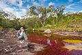 Fotógrafo en el Río Caño Cristales Colombia.jpg