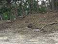 Foto Bornia Begrazingsdruk.jpg