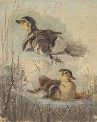 Study of Ducks on the Water II.