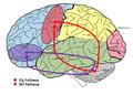 Frontocerebellar pathways.png