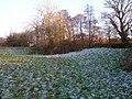Frosty Ground, Horse Brook - geograph.org.uk - 1099562.jpg