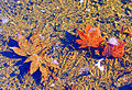 Frozen puddle with fall leaves.jpg