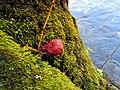Fungi South Toe River Celo Camp NC 4283 (24096489988).jpg