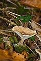 Fungus (5360257315).jpg