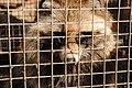 Fur Farming (2008).jpg