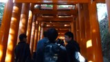 File:Fushimi Inari-taisha Senbon torii - one section - 2015-12-29.webm