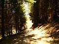 GONZERATH - panoramio.jpg
