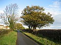 Gallogate Lane - geograph.org.uk - 1044671.jpg