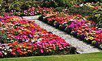Garden colours IMG 6467 (14700799236).jpg