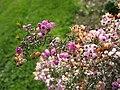 Gardenology-IMG 4734 hunt10mar.jpg