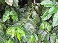 Gardenology.org-IMG 2709 rbgs11jan.jpg