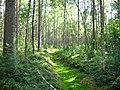 Garkalnes novads, Latvia - panoramio - SkyDreamerDB (11).jpg