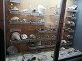 Gastropoda et Lamellibranchia - collection - PMS.jpg