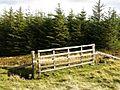 Gate, Breach Law - geograph.org.uk - 572802.jpg