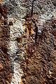 Gayundah in detail, february 2014, (19) (12478642973).jpg