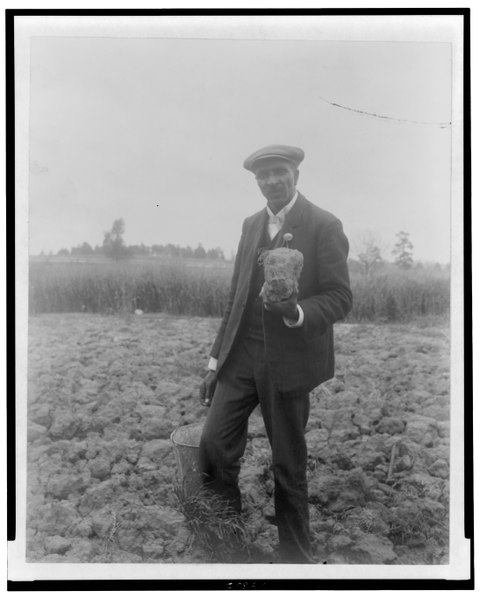 File:George Washington Carver, full-length portrait, standing in field, probably at Tuskegee, holding piece of soil LCCN95507555.tif
