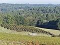 Ginestet Sainte-Foy-des-Vignes paysage (4).jpg