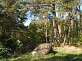 Glacial stones in the woods - panoramio.jpg