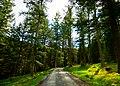 Glendalough woods.jpg