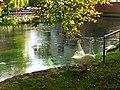 Goose - panoramio (3).jpg