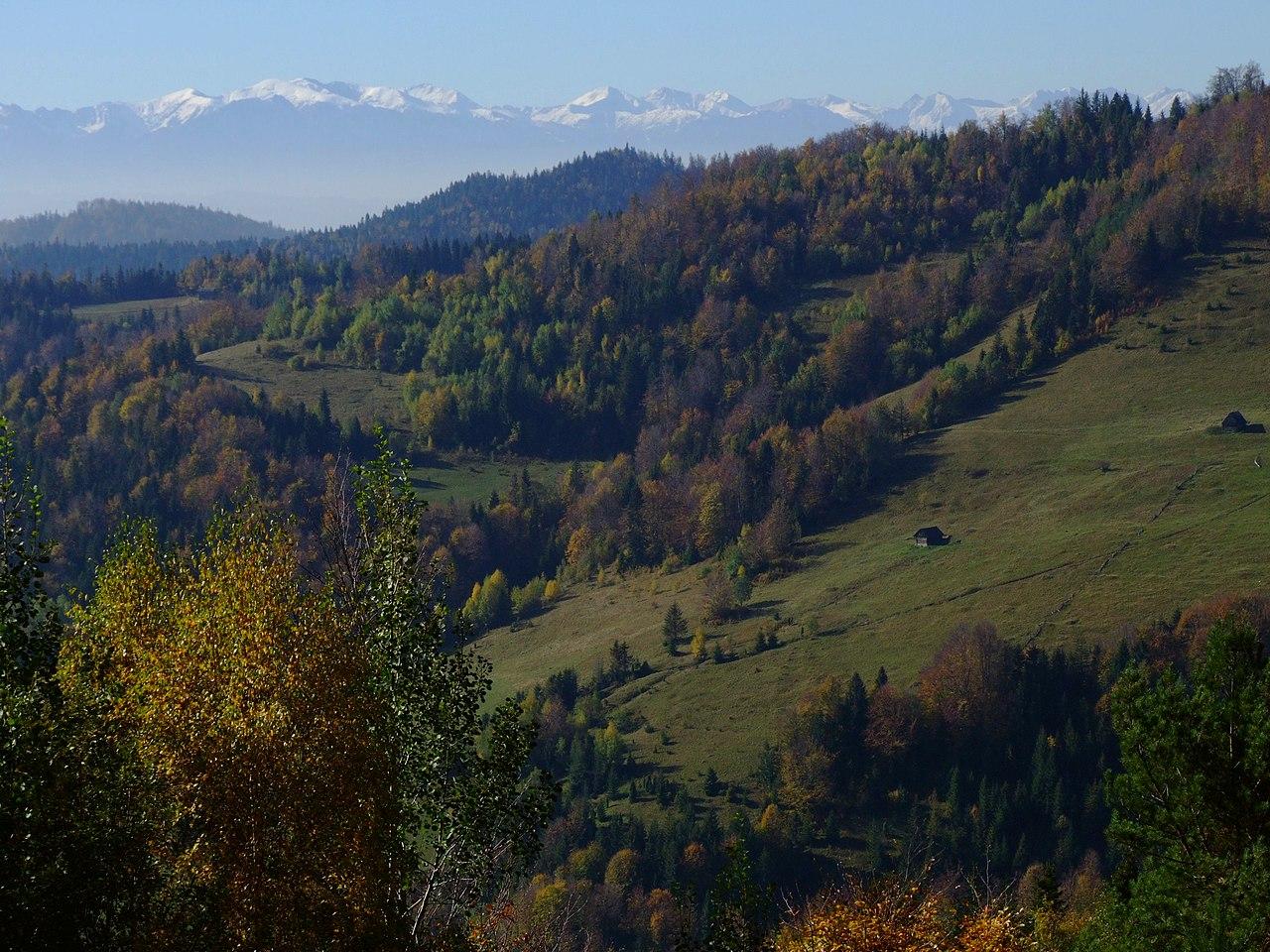 Gorce z widokiem na Tatry
