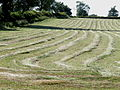 Grass windrows Allesley 2.jpg