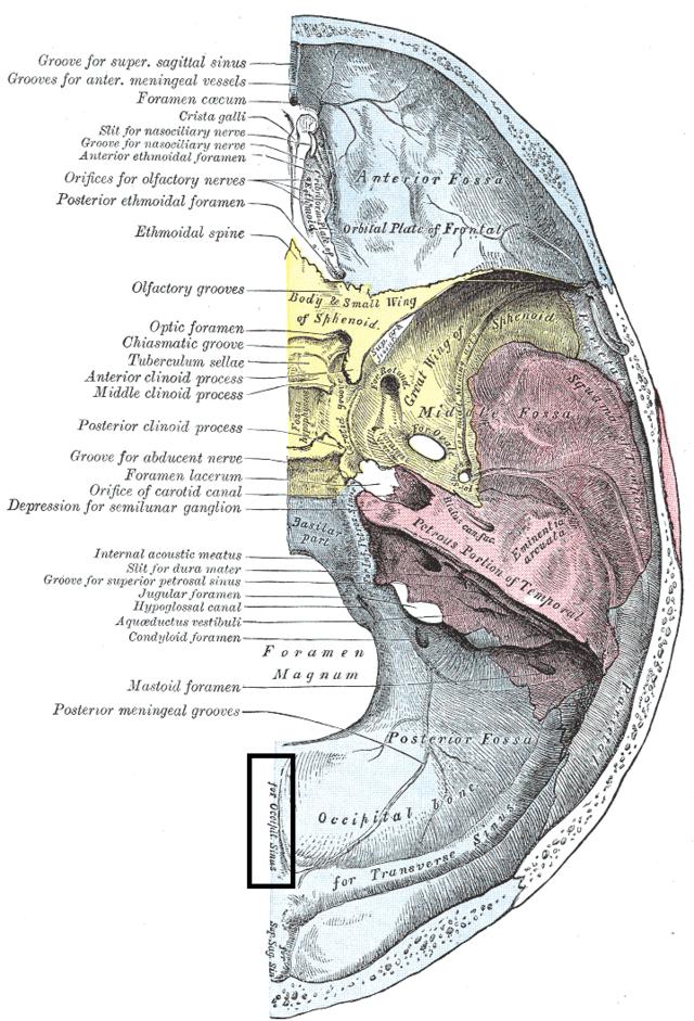 Internal occipital crest - Wikiwand