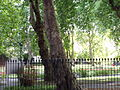 Green Space by Euston Station 4.jpg